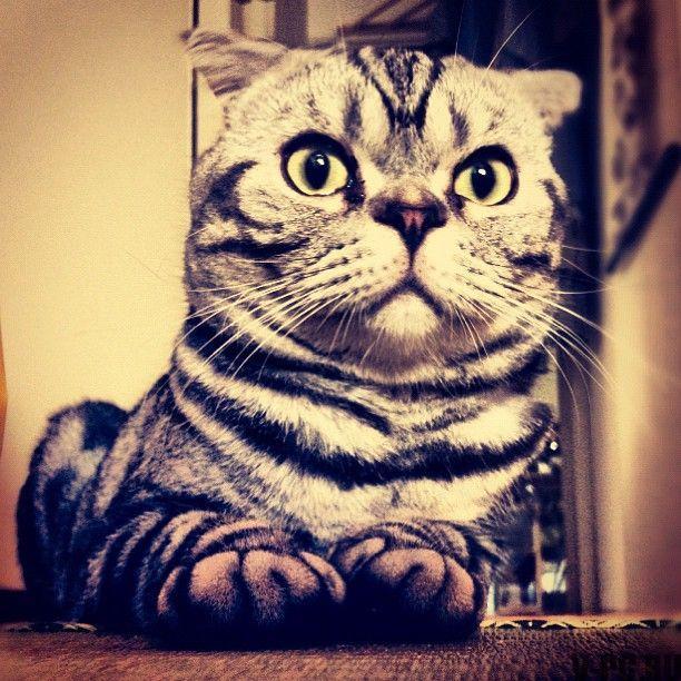 cat_wins_01