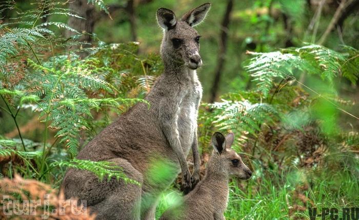 кенгуру в Инстаграм